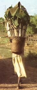 nzangue